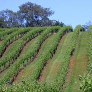 Chalkers Crossing Rolling Vineyard